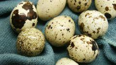 As quail eggs