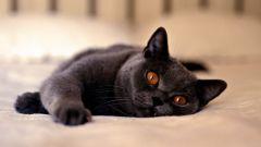 У кошки гноятся глаза: что делать