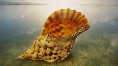 Почему в ракушках слышен шум моря