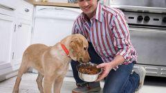 Каким мясом надо кормить собак