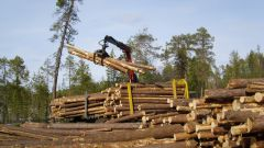 Как перерабатывают древесину