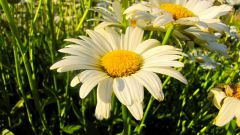Многолетние неприхотливые цветы для садового участка