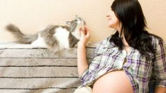 How cats react to pregnant mistress and the appearance of the baby