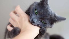 How to treat the bite of a domestic cat