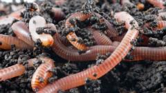 Как передвигается червь
