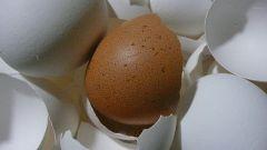 Как перемолоть яичную скорлупу