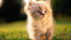Как содержать котенка в квартире, чтобы не было запаха