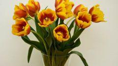 Какие цветы дольше всех живут в вазе