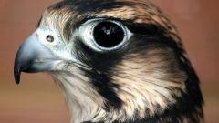 У каких животных, рыб и птиц самое лучшее зрение