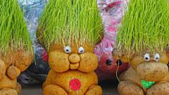 Как ухаживать за травянчиком