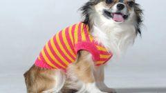 Какие бывают размеры одежды для собак