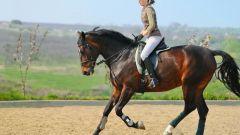 Как научиться скакать на лошадях