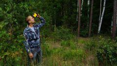 Когда отмечается День работников леса