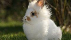 Какие продукты опасны для декоративного кролика