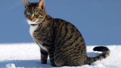 Как выглядят все породы кошек