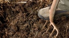 Навоз как удобрение для садовых и огородных культур