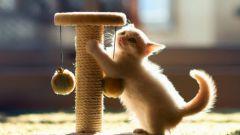 Как отучить кошку отдирать и царапать обои дома