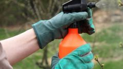 Herbicides to kill weeds: species and methods of use