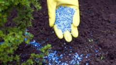 The better fertilize the soil with manure or chemical fertilizers