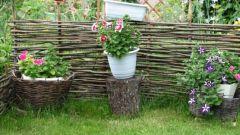Как красиво украсить участок на даче летом