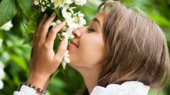 Какие есть цветы с сильным запахом