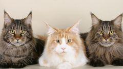 Какие нужны документы для породистого кота