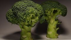 Broccoli, Brussels and cauliflower: growing and care