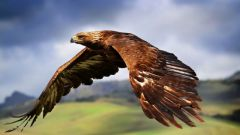Для чего птицам перья