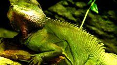 Кровеносная система земноводных, ракообразных и рептилий
