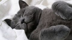Как выбрать успокоительное для кошки