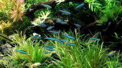 Какое количество рыбок должно жить в 30-ти литровом аквариуме