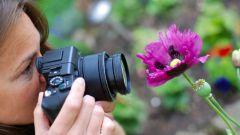 Как выбирать фотоаппарат: советы и рекомендации