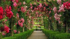 Как создать садовую арку своими руками