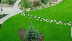 Колесный триммер – альтернатива дорогой газонокосилке