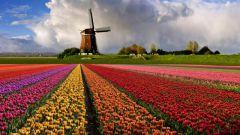 Где находится Голландия