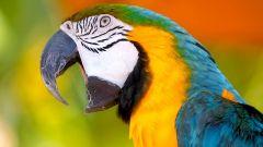 Какие виды домашних попугаев бывают