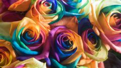 Каких цветов существуют розы: факты