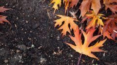 Что такое гумус почвы: состав и свойства удобрения