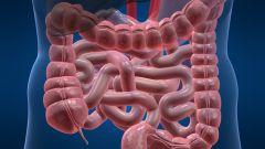 Какие функции у кишечника