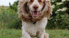 Как выбрать красивую и умную собаку средних пород