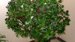 Какие растения согласно Фэн-шуй приносят удачу
