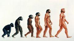 Этапы эволюции человека: сложное простыми словами