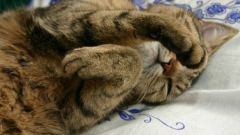 Где должна спать кошка