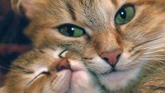 Почему у кошки нет пупка
