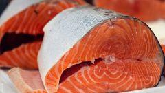 Чем отличается лосось от семги
