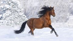 What speed can develop a horse