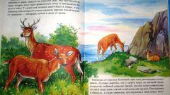 Как написать рассказ о животном