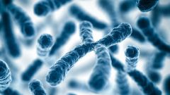 Что такое половой хроматин