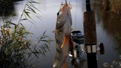 Лучшие приманки для ловли окуня в водоемах