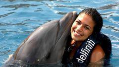 Где в Египте поплавать с дельфинами